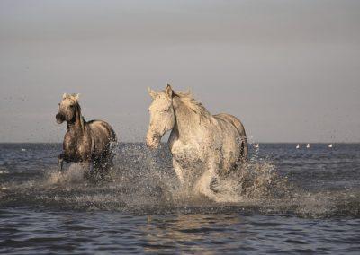 horse-1993174_1920