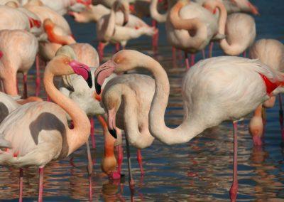 pink-flamingo-3090134_1920